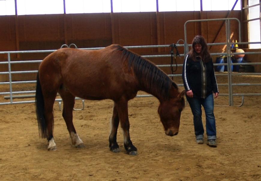 """bei der Freiarbeit im Roundpen """"das Pferd auf sich wirken lassen"""" © Silke Laib, Ergo- & Kunsttherapeutin, Reitpädagogin IPTh"""